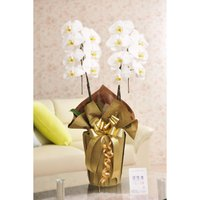花とギフトのセット 胡蝶蘭 大輪2本立とカタログギフト(ヴァンウェスト/アルドワーズ) biz-hana 02