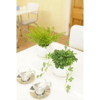 造花アート 観葉植物2点セット シュガーパイン&アジアンタム※白丸陶器鉢【送料無料】