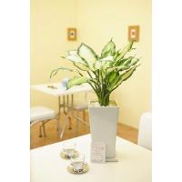 造花アート 観葉植物Sサイズ ディフェンバキア※白角縦長陶器鉢【送料無料】