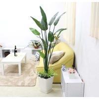 光触媒 人工 ストレリチア 約1.5〜1.6m オリジナル寄せ植え仕立て+スクエアホワイト鉢