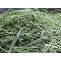 【29年度産新刈り】【送料無料】牧草市場 スーパープレミアム チモシー 1番刈り 牧草 3kg (500g×6パック)|bokusoichiba|04