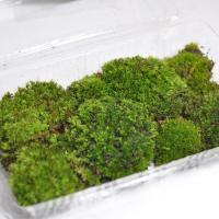 きめの細かい苔で盆栽の根元に貼るには最適なコケです。当店で販売している盆栽にも使用している苔です。そ...