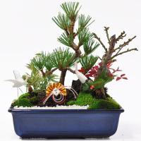 7号サイズの松竹梅寄せ植えです。雪景色の日本庭園の情景を鉢の上に表現しています。きっと良い年を迎える...