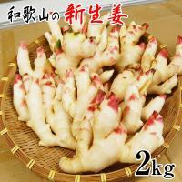 ●商品名 和歌山の新生姜  ●内容量 約2kg +【美味しい新生姜レシピ】プレゼント♪  ●送料につ...