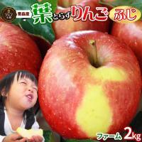 見た目よりも味重視の葉とらずりんご一番人気『ふじ』! 限定お試し規格お手軽2kg!!  りんごに付い...