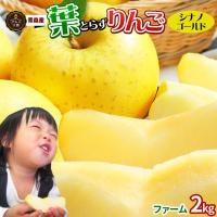 葉とらずりんご  りんごの王様 ふじ 以上のパリパリ食感! 糖度が高く、酸味もあるリンゴので とても...