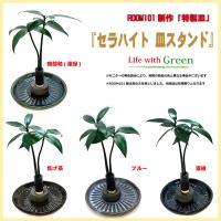 土なし 清潔 水やり簡単 「セラハイト 皿スタンド 2個セット」植物は3種から、皿は4色から選択できます