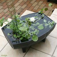 木樽鉢でビオセット(メダカ付) スイレン白 木樽鉢で本格ビオトープ! 玄関前やお庭に置くだけでお洒落...