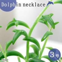 (観葉植物)ドルフィンネックレス 2.5~3号(1ポット)
