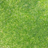 浮草の中で、1番小さい種です ミジンコウキクサ(1カップ分) 販売名 ミジンコウキクサ 別名 仁丹藻...