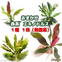 熱帯魚 new_tonan ech_thai 水草 お買い得セット ミックス all_plants ...