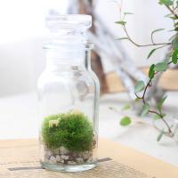 (観葉植物)苔Terrarium 羊の丘 テラリウムキット 本州四国限定