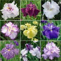 ※画像はイメージです。花の色、形等は写真の見た目と実際の見た目では多少異なる場合がございます。※販売...