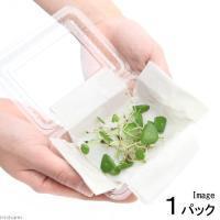 (水草)ミニマッシュルーム(水上葉)(無農薬)(1パック) 北海道航空便要保温