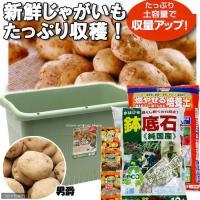 (観葉植物)プランターで育てる ジャガイモ栽培セット 男爵(1セット) 家庭菜園