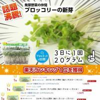 ブロッコリースプラウト 野菜 ブロッコリーの新芽 花粉症 12パック入 サラダコスモ ちこり村