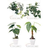 フェイクグリーン インテリア 光触媒 観葉植物 大型 おしゃれ シュガーバイン パキラ など 6種類 リアル (送料無料)