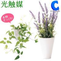 光触媒 人工観葉植物 造花 フェイクグリーン インテリア 消臭 光触媒Green クレマチス ラベンダー