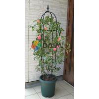 バラやつる花をおしゃれにサポート!植木鉢でバラやつる花のオベリスクが楽しめます。 園芸/支柱/竹/ガ...