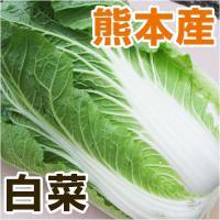 熊本の健やかな土と水で育ったみずみずしい白菜です。 寒くなるほどよく巻き、甘く美味しくなります。 鍋...