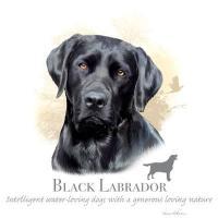 【メンズ】ラブラドール ブラック 犬 動物Tシャツ【Lサイズ】