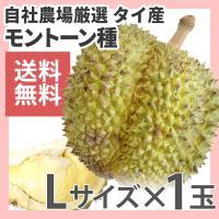 ドリアン モントーン種 タイ産 1玉 生鮮 Lサイズ 送料無料