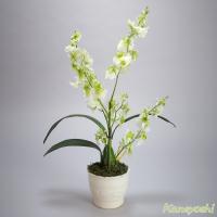 お祝い 造花 フラワーギフト 光触媒オンシジューム 【1本立ショート】 ホワイトグリーン