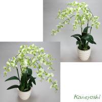 お祝い 造花 フラワーギフト 光触媒オンシジューム 【3本立】 ホワイトグリーン