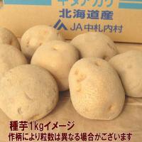 野菜・種/苗 春じゃがいも種芋 キタアカリ 馬鈴薯種芋 1kg