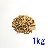 種子えん麦(オーツヘイ)殻つき1kg
