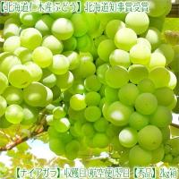 ■北海道から収穫日に、航空便で発送、翌日お届け致します(高鮮度商品)  ■本年9月下旬頃より発送、航...