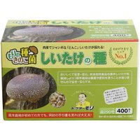 シイタケ種駒 【しいたけ種駒400個】 [しいたけ菌/椎茸菌/しいたけ栽培/シイタケ栽培/椎茸栽培] 日本で一番売れてます!