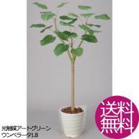 観葉植物 造花 おしゃれ ウンベラータ1.8 お祝い
