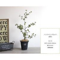 ベンジャミンバロック H60  観葉植物 造花 インテリア CT触媒 重要:北海道、沖縄 送料別途 +1500円
