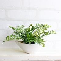 アジアンタム 小舟型 12cm 造花 観葉植物 インテリア CT触媒 ミニ 造花