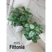 観葉植物 ミニフィットニア 18cm 造花 フェイクグリーン 光触媒 CT触媒