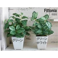 観葉植物 ミニフィットニア H18 造花 フェイクグリーン 光触媒 CT触媒