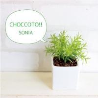 ミニ ソニアポット 造花 観葉植物 光触媒 CT触媒 インテリア フェイクグリーン