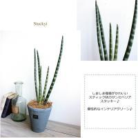 サンセベリア・スタッキー H50  観葉植物 造花 インテリア CT触媒 フェイクグリーン