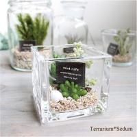手のひらサイズのテラリウム♪ 涼しげなガラスにちいさな多肉植物たち♪ おしゃれなインテリアグリーンで...