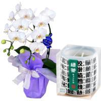 ミディ胡蝶蘭 お供え 花 ローソクセット 2本立 白色 カメヤマ 故人の好物シリーズ 緑茶キャンドル ギフト