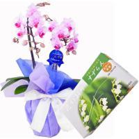 胡蝶蘭 お供え 線香セット 2本立 ミディ ピンク色 薫寿堂 花かおり すずらん 微煙タイプ 632