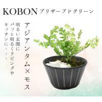 プリザーブドグリーン インテリアグリーン 観葉植物 盆栽 ミニ プリザーブドフラワー KOBON アジアンタム モス アイデア 便利 キャンセル不可