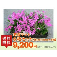●全種類(25cm×25cm)×6枚 ●品種の選択はできません。予めご了承ください。  ※芝桜は色別...