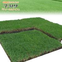 「TM9ティーエムナイン」は、「芝生の維持管理費を低減」するために開発された、刈り込み・施肥量をおさ...