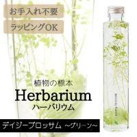 [松村工芸] ハーバリウム BP-17102 デイジーブロッサム 5.グリーン【ハーバリウム キット...