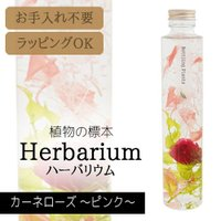【あすつく】松村工芸 ハーバリウム BP-18104 カーネローズ 2.ピンク 【ハーバリウム キッ...