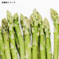 アスパラガスは家庭菜園で手軽に作れる強健な野菜です。収穫の楽しさは格別。そして、新鮮なものは味わい豊...