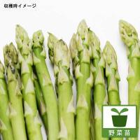 アスパラは、家庭菜園で手軽に作れる強健な野菜です。緑色が濃く、穂先までしっかり締まり、かんたんな調理...