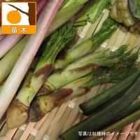 山菜の王者、タラノキ。早春に味わう新芽は、少し苦味のあるホクホク感がたまらないおいしさです。天ぷらや...